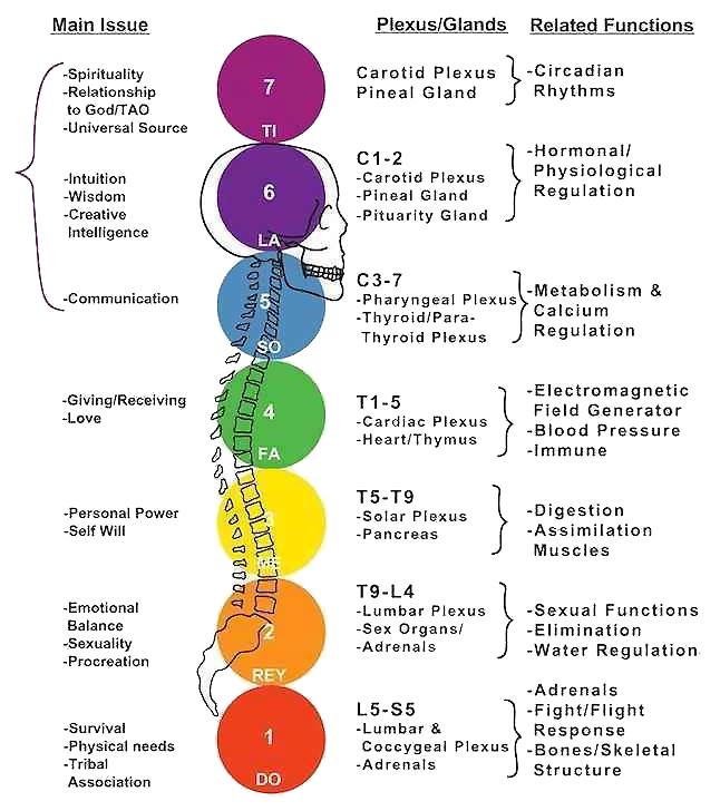 I 7 chakra principali